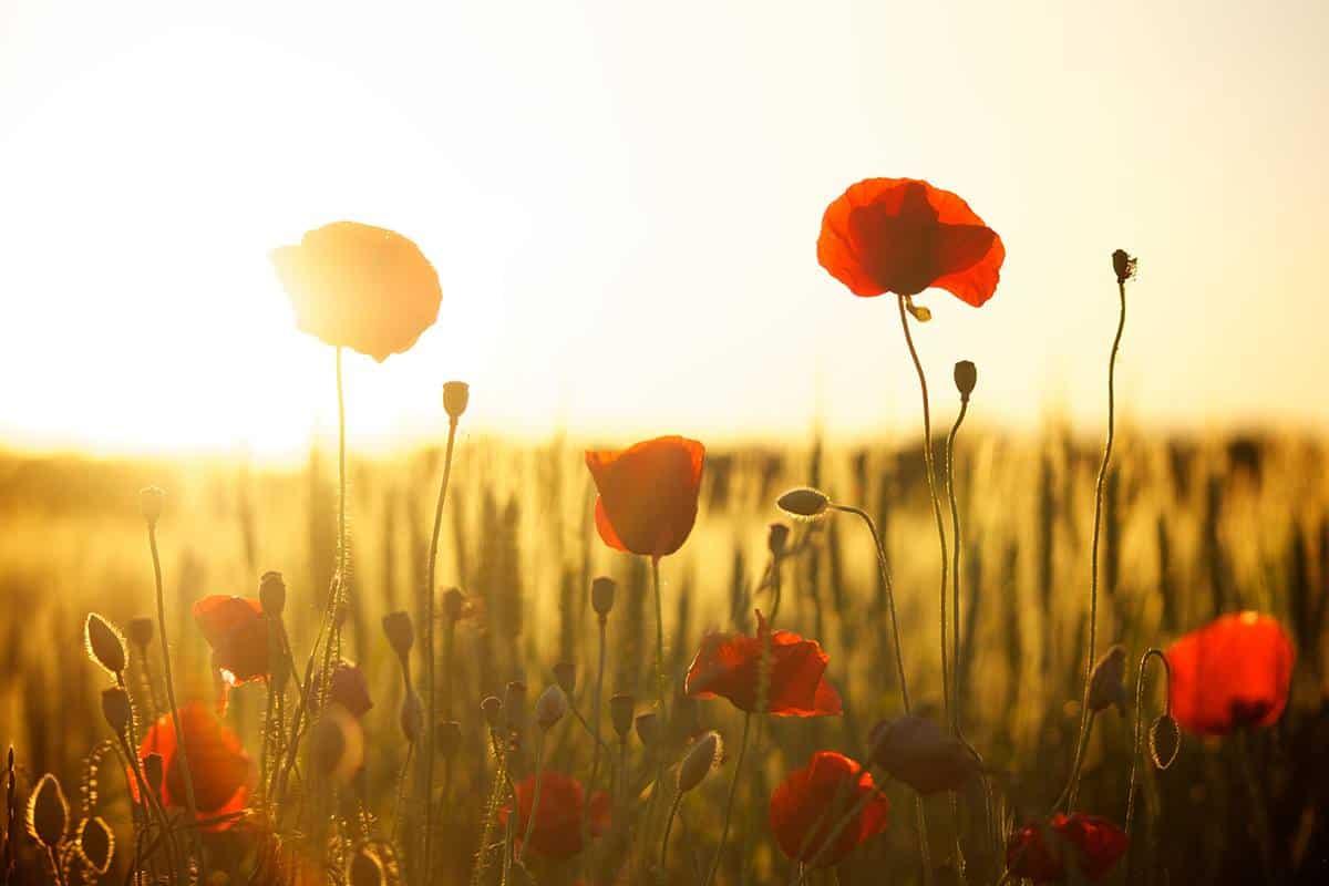 Blommor i solnedgång - Teamout erbjuder kvalificerade ledarskapsutbildningar inom UGL, utveckling av grupp och ledare